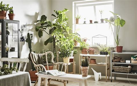 tips  ideas  improving  air quality   home