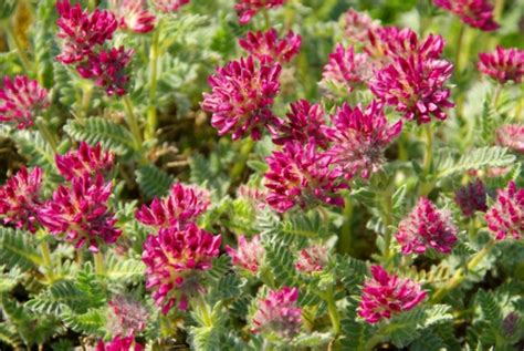 piante da giardino resistenti piante resistenti al freddo pollicegreen