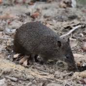 website to preserve backyard wildlife in australia