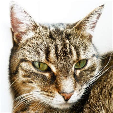katzenspielzeug selber machende katzenspielzeug einfach