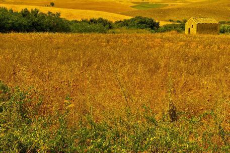 di commercio treviso prezzi cereali agricoltura a borsa merci bologna primo listino cereali