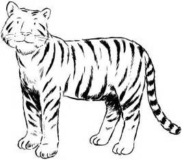 big tiger colouring pages