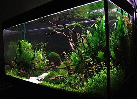 Driftwood Aquascape by Aquascape Driftwood 1 Aquascape Editor
