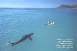 The scariest picture ever shark swims towards kayak