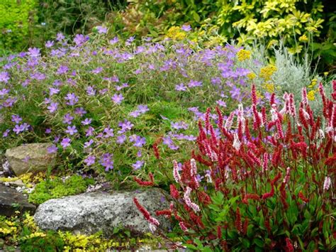 cottage garden perennials uk kenneth black bursary the cottage garden society