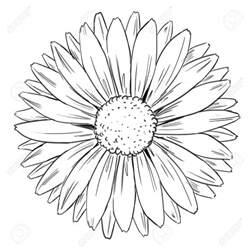 Outline Of Sunflower To Colour by คล ปสอนป กดอกทานตะว น ภาค1 Kookkik S Pimstudio