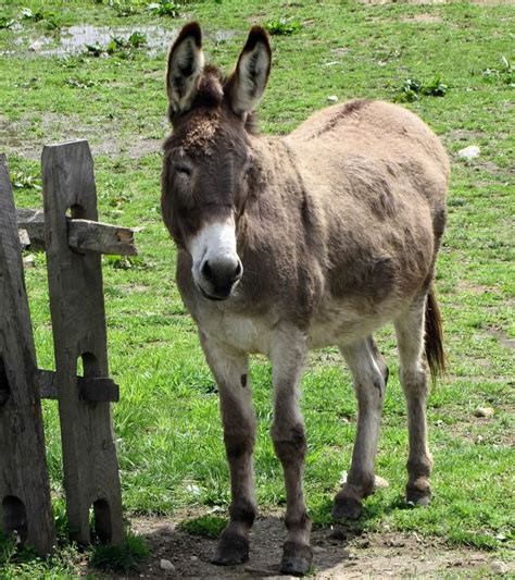 burro animal pictures images photos