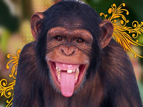 Monkey Wallpaper by Monkey Hd Wallpapers Best Wallpapers Hd Backgrounds