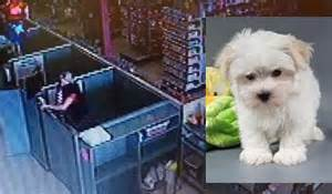 petland dogs 2 puppies stolen from petland stores who should charges
