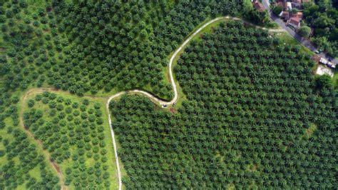 Industri Minyak Goreng Siapkan palm indonesia palm indonesia