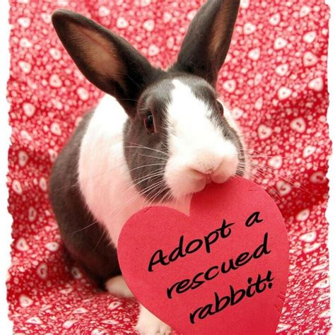 8 Tips On Caring For Pet Rabbits by 180 Best Images About Bunny And Friends On