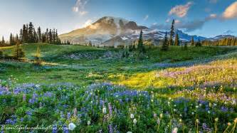 Flowers In Spokane - welcome to mount rainier national park