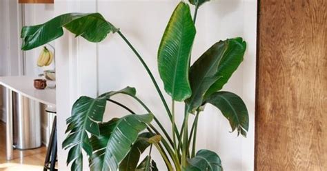 easy apartment plants 4 easy tricks for a more natural less styled looking