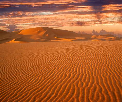 el cazador del desierto caracter 237 sticas del desierto vida animal y plantas mente y cuerpo sano