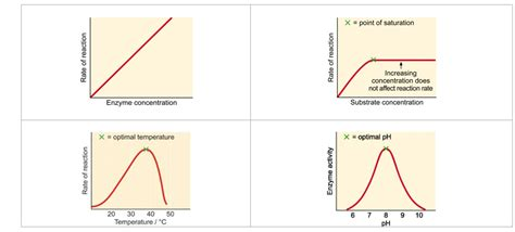 design experiment enzyme activity explain the effects of temperature ph substrate