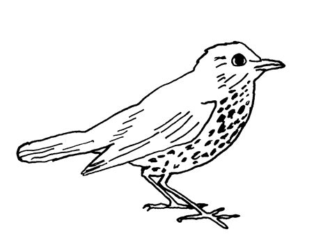 line drawing image gallery line drawings of birds