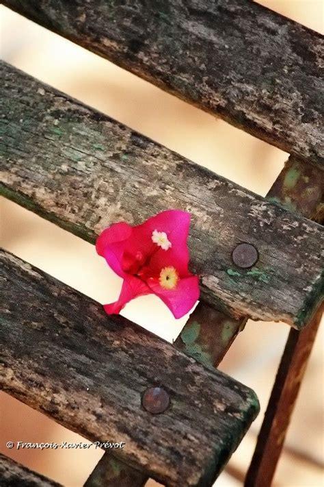 Bando Flower Leaf Blue 20 best photography tour images on