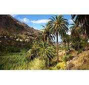 In La Gomera There Are Other Natural Areas Conserved All Around The