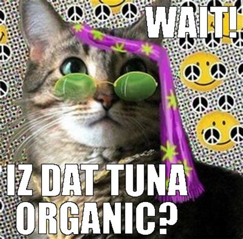 Hippie Meme - image gallery hippie cat meme
