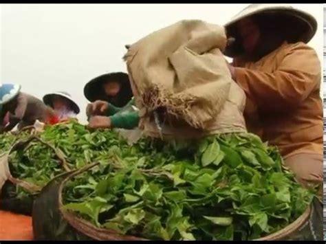 Teh Indonesia mata indonesia teh indonesia yang mendunia seg 2