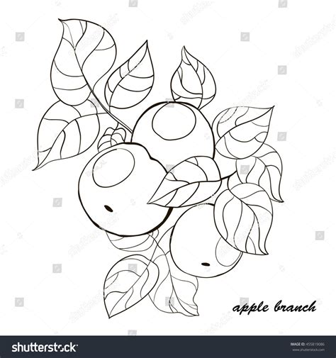 illustrator template artist sketch cards handdrawn apple tree branch fruits leaves stock vector