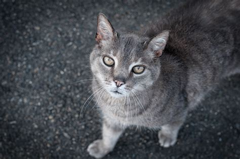 Mainan Kucing Tomcat Mata Nyala Tom Cat Magical Singing Cat No Lx7311 Gambar Hewan Membelai Anak Kucing Binatang Menyusui Fauna Cambang Bertulang Belakang