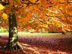 happy garden fall river paleta das m 227 os de deus oriza martins poemas