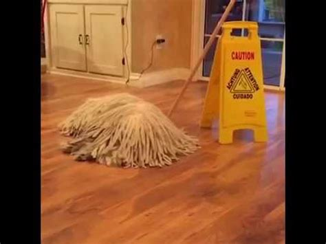 dogs that look like mops that looks like a mop original