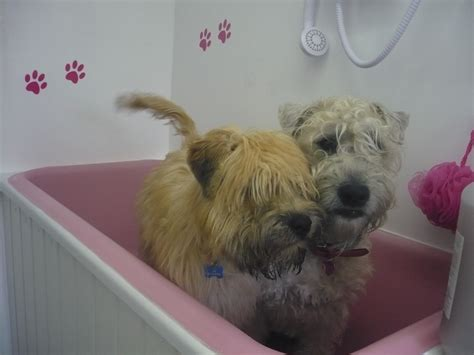 bathtub dog dog bath www imgkid com the image kid has it