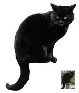 halloween black cats black cat halloween vs stock by astoko on deviantart