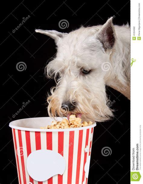 dogs eat popcorn popcorn stock photo image 41254582