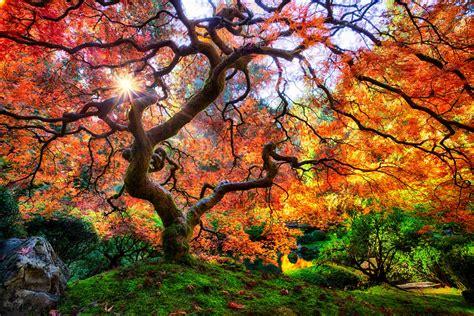imagenes paisajes japoneses hd fotos de los arboles mas hermosos y bellos del mundo