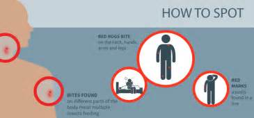 Finding Bed Bugs Bed Bug Bites What You Need To Know Debugged