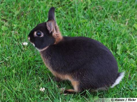 un lapin au jardin