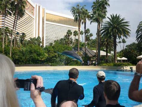 siegfried roy s secret garden dolphin habitat on hotel