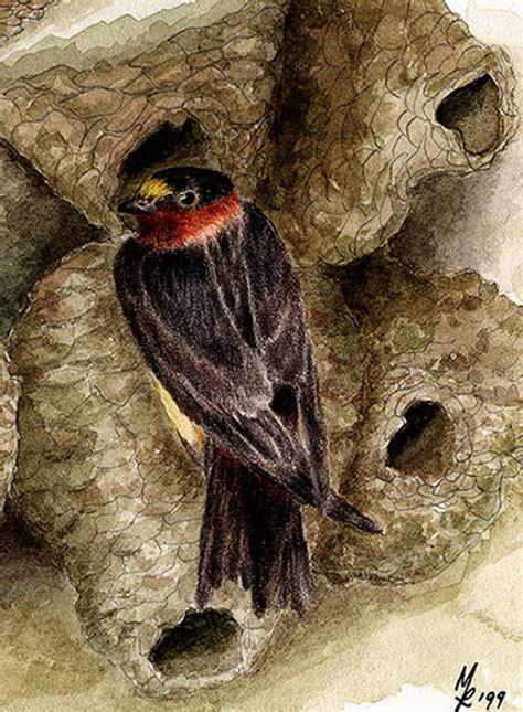 swallows mfr artwork