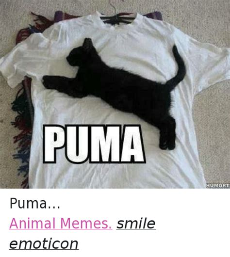 Puma Meme - 25 best memes about grumpy cat and puma grumpy cat and