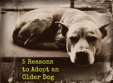 8 Reasons To Adopt A Pet From A Shelter by 5 Reasons To Adopt An Pethelpful
