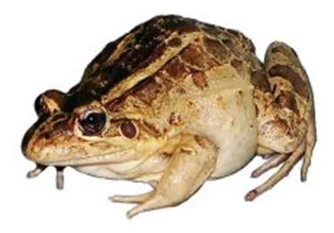how to get rid of frogs in my backyard getting rid of frogs make a house a great home