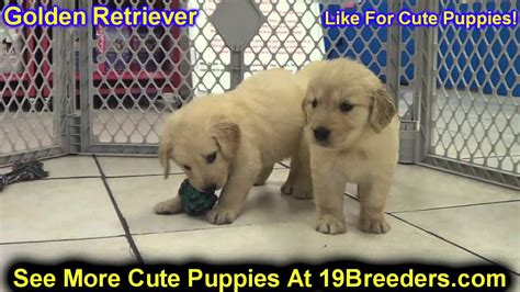 golden retrievers for sale in oklahoma golden retriever puppies for sale in edmond oklahoma ok cleveland comanche