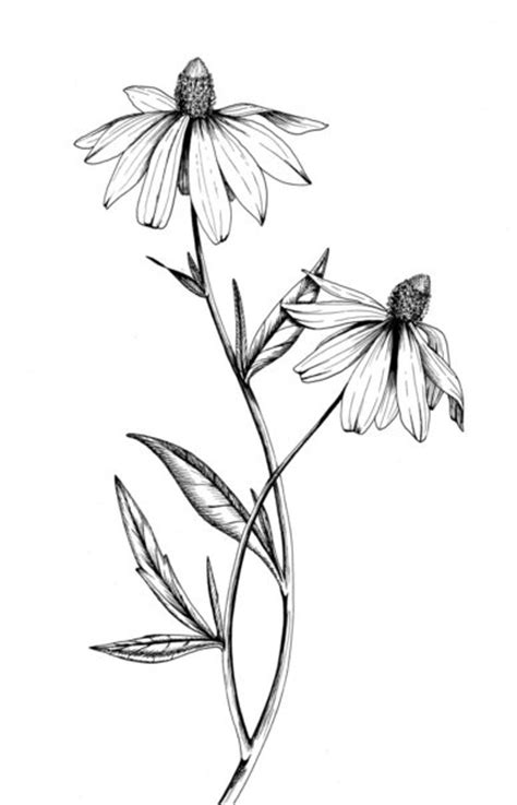 botanical illustrations by meghan witzke at coroflot com
