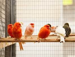 Cheney Manor Garden Centre by Paradise Pets Cage Aviary Birds Wiltshire