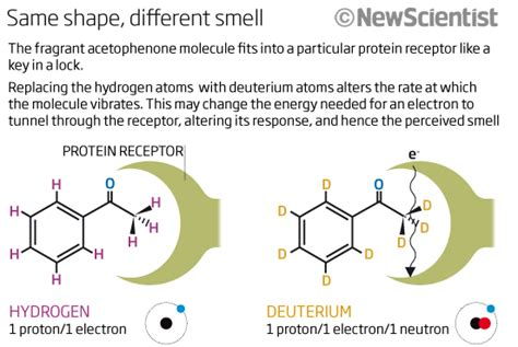 Decoding Odours One Molecule At A Time by Fly Sniffs Molecule S Quantum Vibrations New Scientist