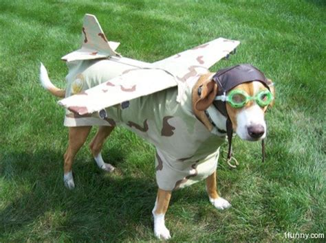 dogs on planes plane 1funny