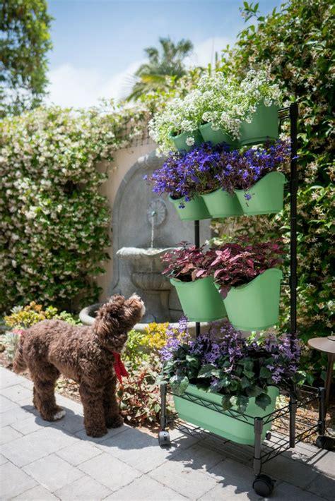 pet friendly indoor plants   home  images