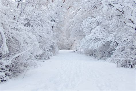 white snow tree download hd wallpapers
