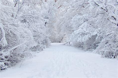 White Snow white snow tree hd wallpapers