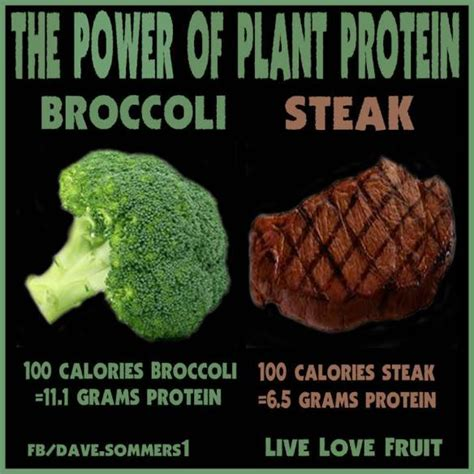 protein i broccoli dr rex equality corner plant protein power