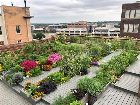 downtown building offers rooftop garden harvest