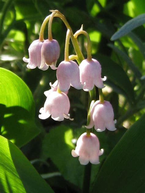 fleurs de mon jardin page